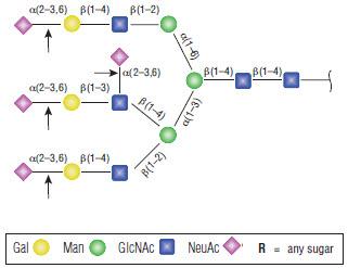 α2-3,6,8,9 Neuraminidase A (P0...