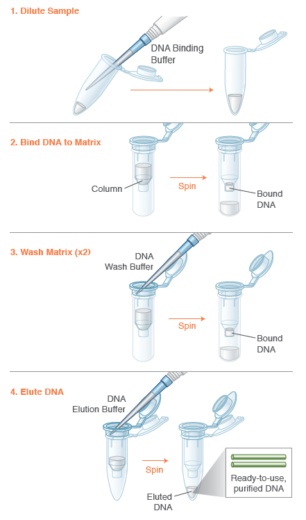 how to read pcr gel